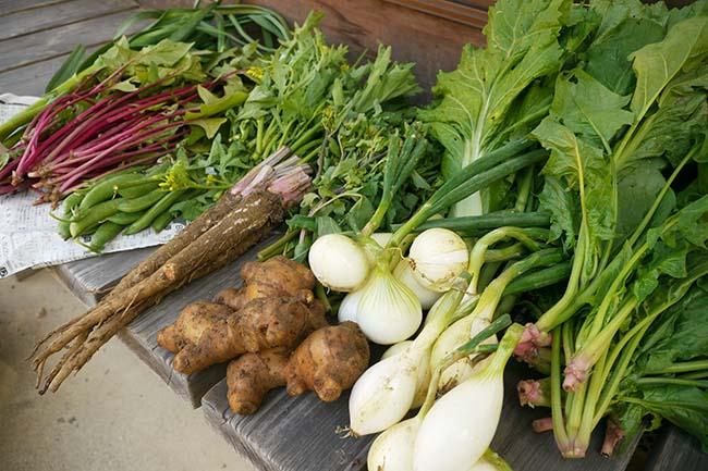 桐島畑の野菜