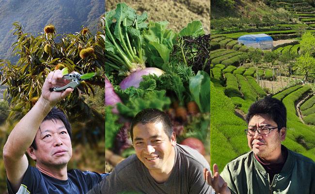 働きながら中山間地域の農業技術を学ぶ!しまんと農業研修生