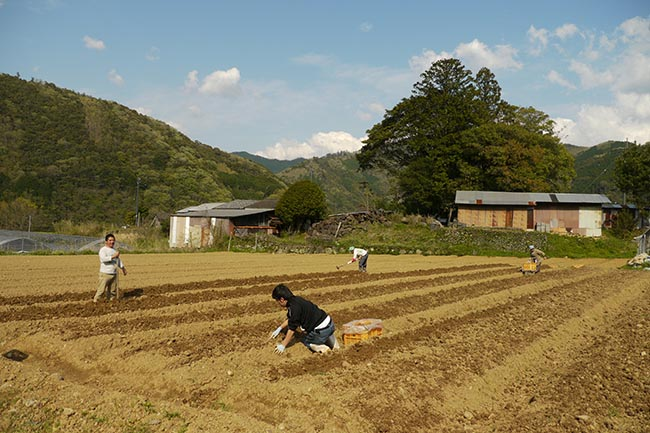 桐島畑の畑