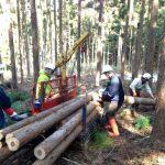 林業インターンシップ