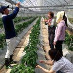 農業インターンシップ