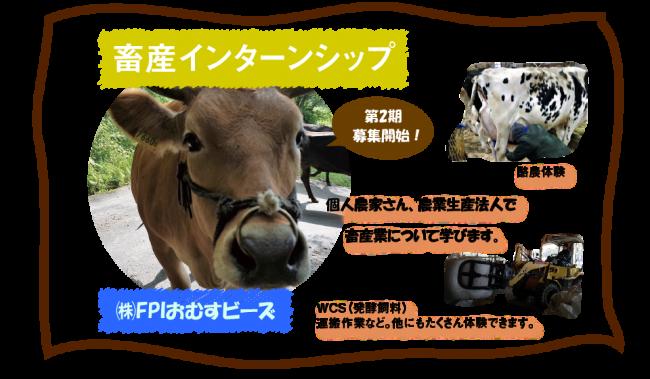おむすビーズの畜産インターンシップ