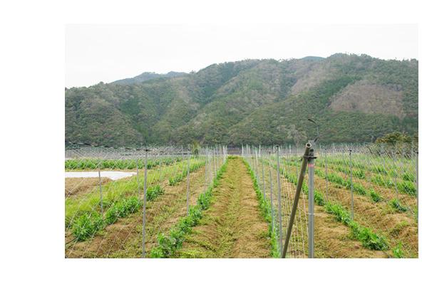 菜食土源新井さんの畑
