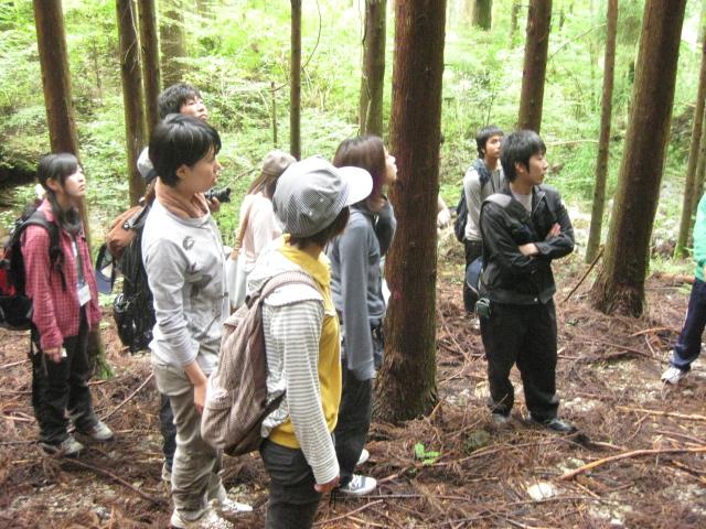 高知の林業の現場