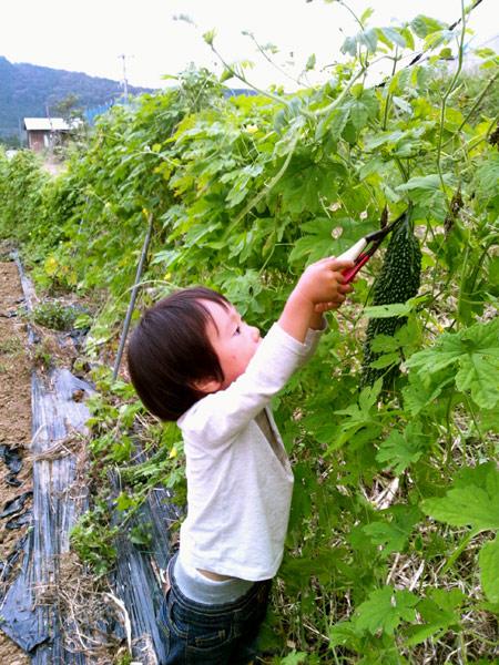 息子の畑で成長録