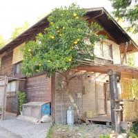 丈太郎の家:遅咲きのヒマワリロケ地