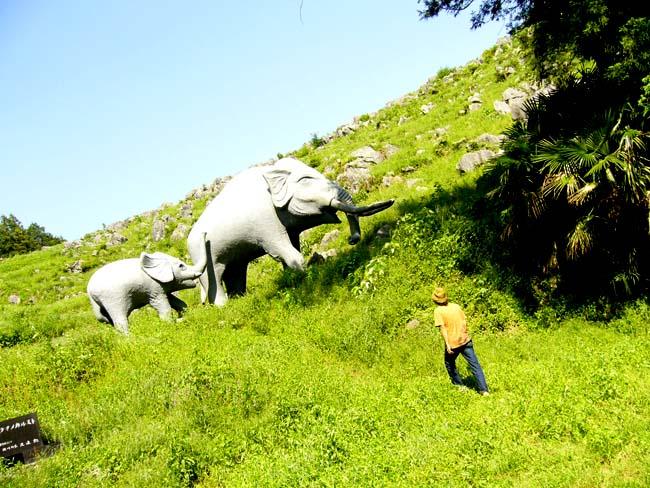 23田舎ゾウ