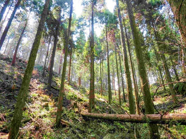 三瀬村 林業