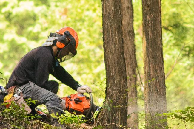 三瀬村 林業 伐倒