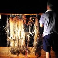 四万十川 鮎漁 網