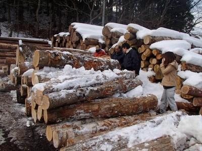 岩泉の明日の林業をつくる会
