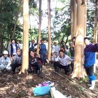 きらめ樹間伐