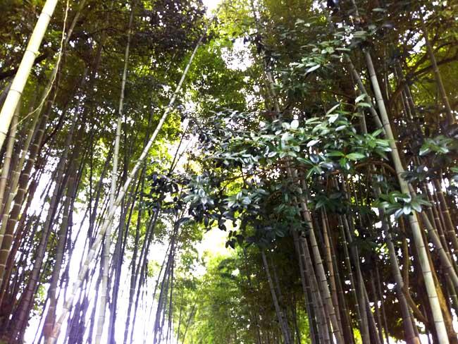 「竹」「竹」