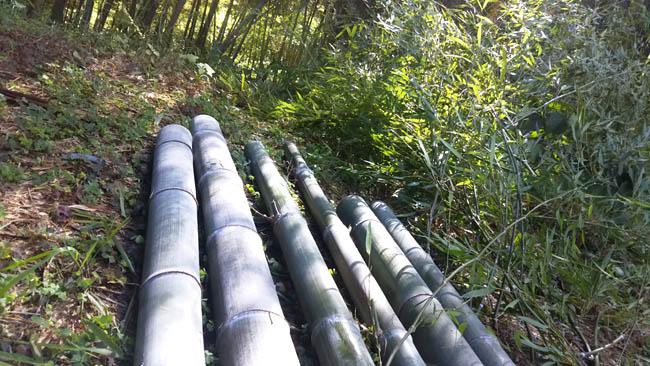 竹に救われています