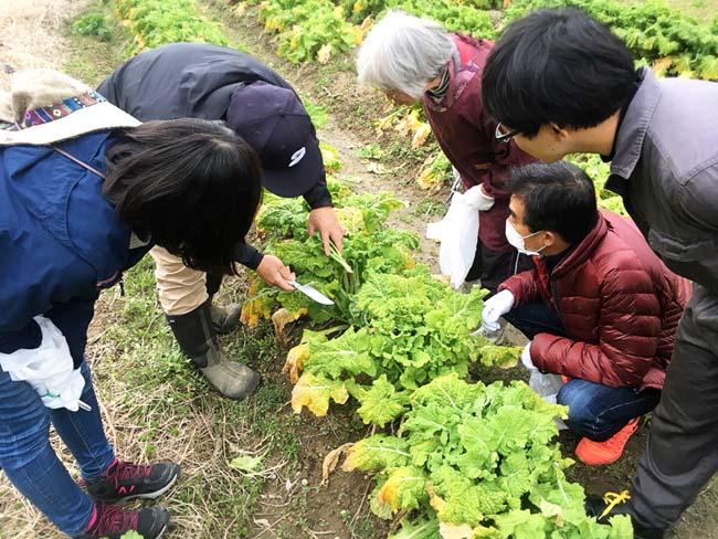 収穫方法をレクチャー