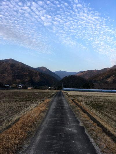 畑からの帰り道