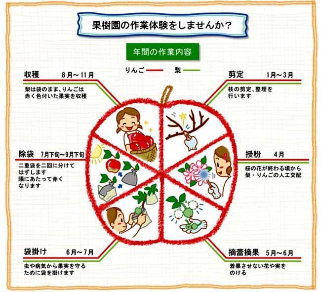土本観光果樹園の年間作業内容