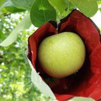 りんごの袋の構造
