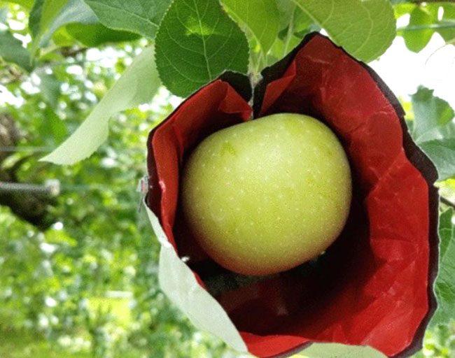 りんごの袋かけアイテム