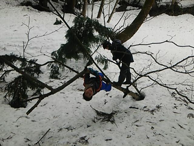 木にぶら下がる