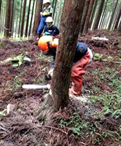 間伐伐倒体験