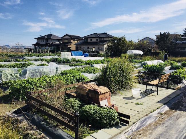 レンタル農園