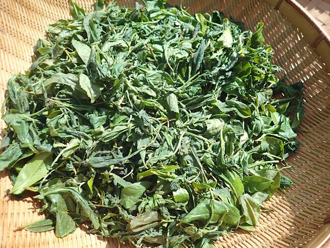 揉み込んだお茶の葉