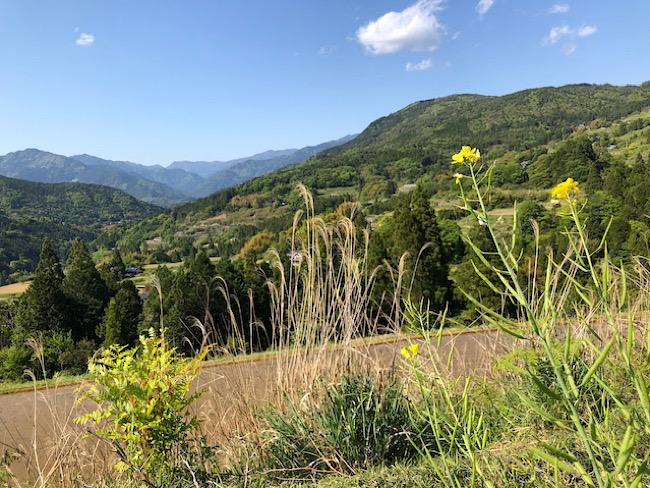 畑からの眺め